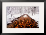 Autumn Passage Print by Jim Brandenburg