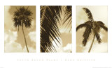 South Beach Palms Posters by Rene Griffith