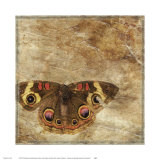 Moth Posters by Susan Friedman