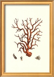 Red Coral I Poster