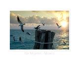 Birds, Isla Mujeres, Mexico Fotodruck von Kevin Oke