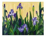 Irises Giclee Print by Jenphotoart