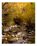 Colorado Stream Photographic Print by Vic Harshberger