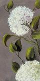 Hortensia Ideal I Art by  Ximena
