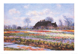 Tulip Fields at Sasenheim Poster by Claude Monet