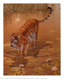 Tiger at the Edge of Night Art by Richard Stanley