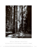 Redwoods, Founders Grove Posters van Ansel Adams