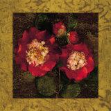 Red Camellias II Poster af John Seba