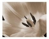 Pinkfarbene Tulpe Fotodruck von Wilson Valentin