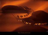 Caravana de dromedarios cerca de Nouakchott (Mauritania) Pósters por Yann Arthus-Bertrand
