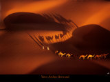 Dromedary Caravan near Nouakchott, Mauritania Posters by Yann Arthus-Bertrand