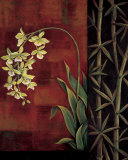 Green Orchid Prints by Jill Deveraux