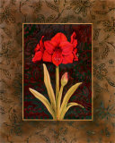 Damask Amaryllis Print by Paul Brent
