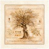 Oliviers de Saint Remy de Provence Kunstdrucke von Pascal Cessou