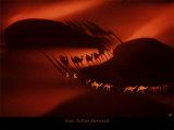 Dromadaires 2 Posters par Yann Arthus-Bertrand