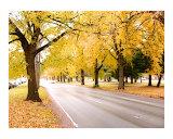 NYC Autumn Street of Gold Reproduction procédé giclée par New Yorkled