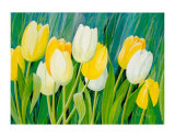 Tulips Prints by Franz Heigl