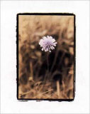 Wildflower I Print by Troy Kendal
