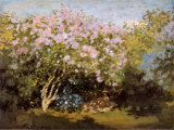 Blossoming Lilac in the Sun, c.1873 高画質プリント : クロード・モネ