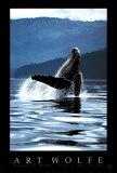 Humpback Whale Kunstdruck von Art Wolfe
