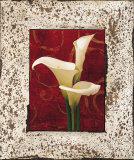 Calla Lilies Poster by John Seba