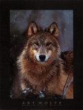 Woodland Pride, Montana Posters av Art Wolfe