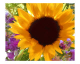 Sunshine Sunflower Photographic Print by Elaine Plesser