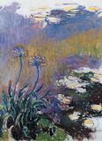 Los agapantos Póster por Claude Monet