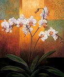 Orkidéer Posters av Jill Deveraux