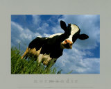 The Cow Kunstdrucke von Emmanuel Panais