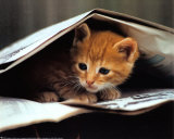 Gato listo Pósters por Stuewer