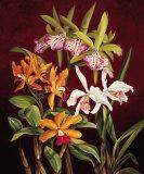 Orchid Trio II Posters by Rodolfo Jimenez