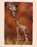 Giraffe Kiss Posters by Simon Mendez
