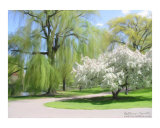 White Willow Photographic Print by Kathryn M. Smith