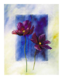 Anemones Prints by Franz Heigl
