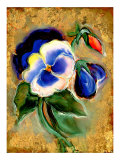 Pansy Lmina gicle por Marcella Rose
