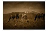Western Foal Reproduction procédé giclée par Jim Tunell