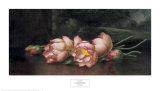 Lotus Flowers: a Landscape Painting in the Background Kunstdrucke von Martin Johnson Heade