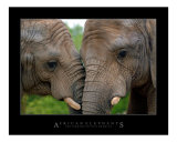 Affectionate African Elephants Photographic Print by Neil Bramley