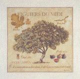 Figuiers du Midi Posters by Pascal Cessou