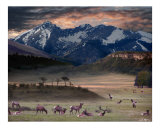 Wapiti Heaven Giclee Print by Bill Stephens