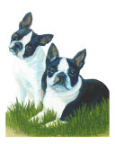 Two Are Better Than One - Boston Terriers Giclee Print by Rhonda Watson