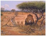 Löwenfamilie Poster von Clive Kay