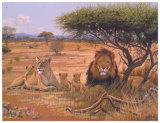 Familia de leones Pósters por Clive Kay