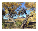 Cottonwood Frame Photographic Print by David Cramer