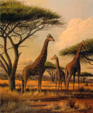Giraffe Family Prints by Clive Kay