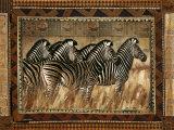 Cebras Pósters por Rob Hefferan