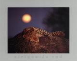 Leopardo con luna naciente Póster por Thom