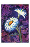 Daisy Lmina gicle por Marcella Rose