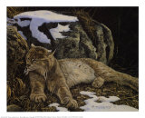 Time to Rest Lynx Prints by Alan Sakhavarz